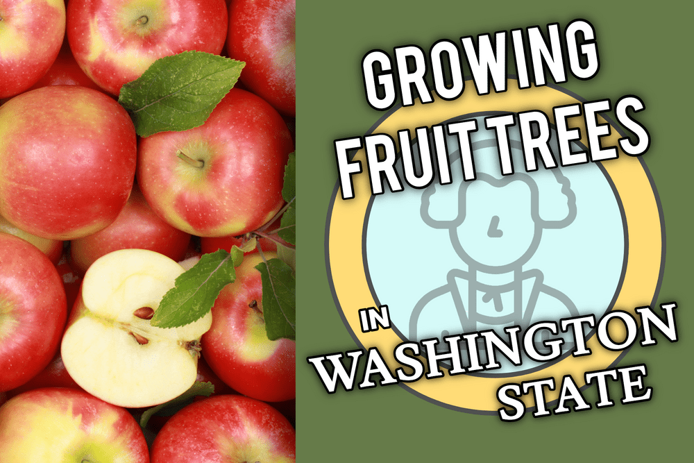 What Fruit Trees Can I grow In Washington? Featured