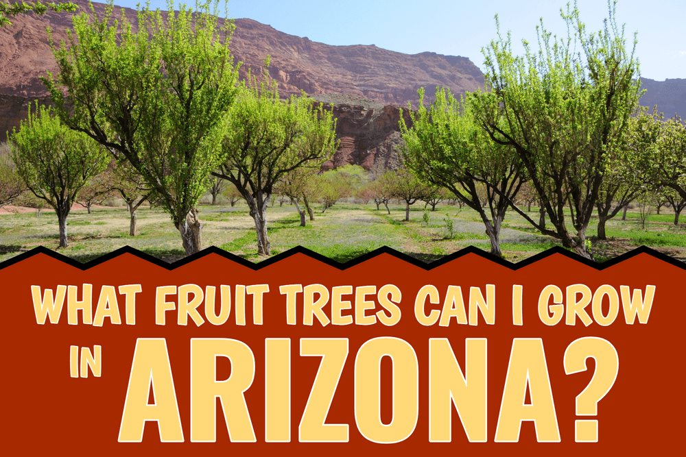 What Fruit Trees Can I grow In Arizona? Featured